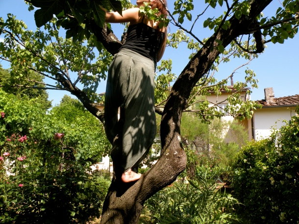 Climbing an apricot tree in Florence...